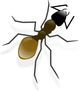 ameisenkoeder test